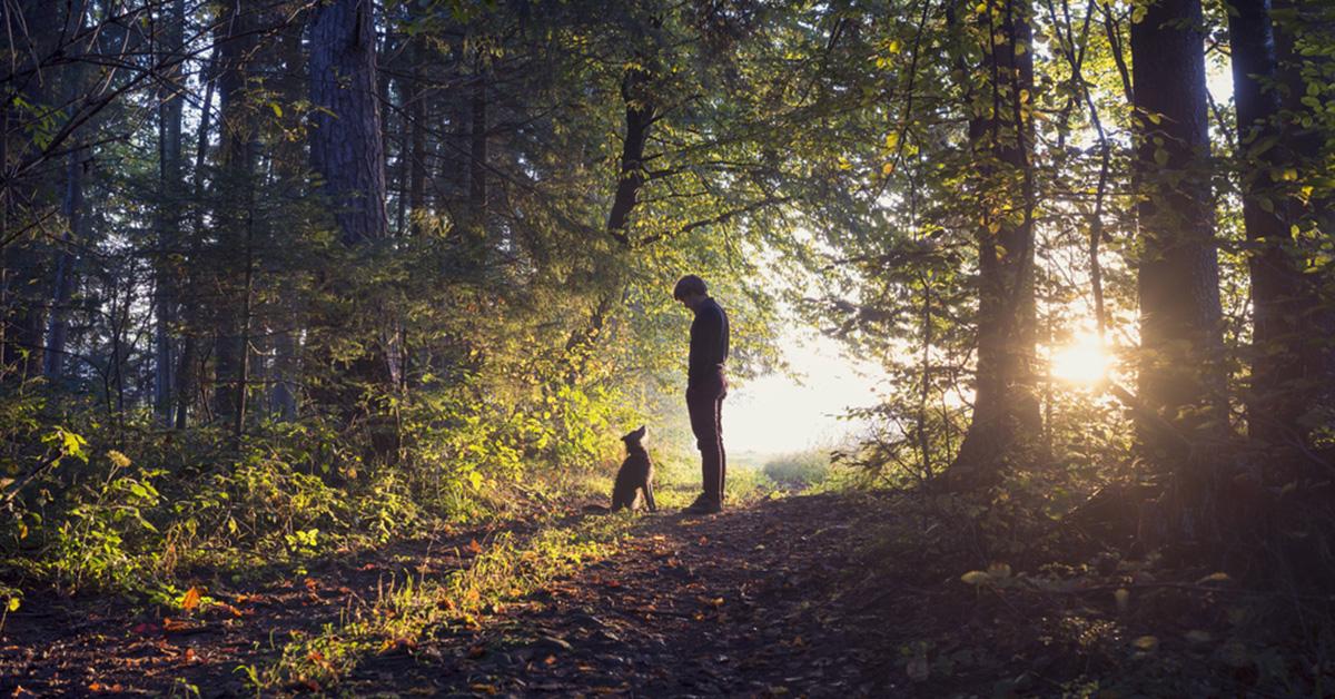 forest Nehýbete sa počas karantény? Riskujete vaše zdravie!